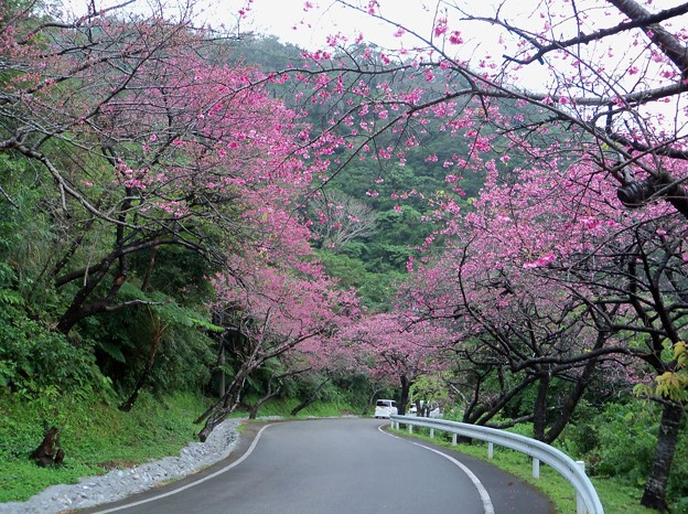 mount-yaedake-and-sakura-no-mori-park-in-northern-okinawa
